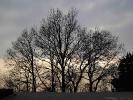 Gruppo di alberi in inverno al Colle della Maddalena