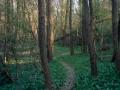 Il sentiero dei boschi